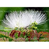 New Arrival 10 Seeds bonsai Albizia Flower seeds called Mimosa Silk Tree seeds,Beautiful flower potted plants For Garden Home