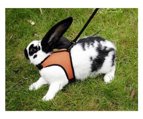 sport-arnes-para-conejos-con-correa-flexible-de-120-cm
