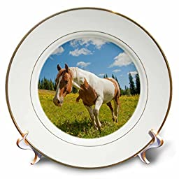 3dRose cp_209347_1 Washington, Pasayten Wilderness, Slate Pass. Horse In An Alpine Meadow-Porcelain Plate, 8\