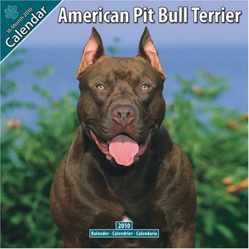 American Pit Bull Terrier Temperament: What's Good About 'Em, What's Bad About 'Em