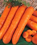 Kings Seeds - Patio Veg Collection - Carrot - Courgette - Pepper - Onion - Tomato