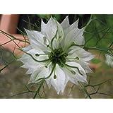 400 LOVE IN A MIST BLUE & WHITE MIX (Fennel Flower) Nigella Damascena Flower Seeds