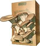 """Fungaea Oyster Mushroom """"Shroom Box"""""""