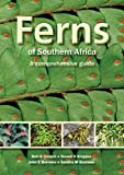 img - for Ferns of Southern Africa: A Comprehensive Guide book / textbook / text book