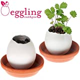 Eggling Flowers - Strawberry Christmas Xmas Holiday Stocking Filler Secret Santa Present