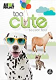 Too Cute: Season 4 [Import]