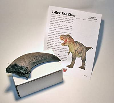 (DM 322) T-Rex Toe Claw