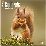 Squirrels (Multilingual Edition)