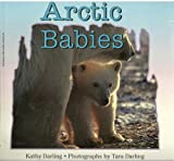 Arctic Babies (0590974416) by Darling, Kathy