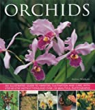 img - for Orchids: An illustrated guide to varieties, cultivation and care, with step-by-step instructions and over 150 stunning photographs book / textbook / text book