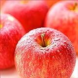 青森県産 ご家庭用 りんご サンふじ 5kg(13玉-20玉入り/生食可)