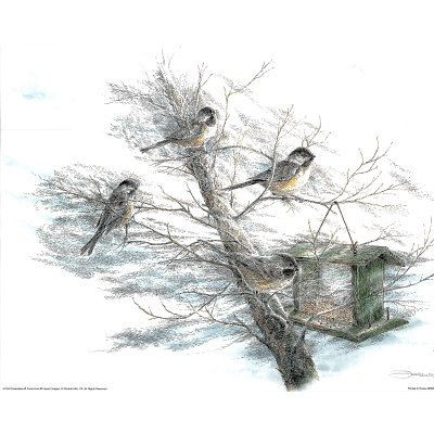 (16x20) Chickadee (Birds at Feeder) Art Print Poster