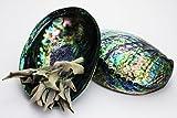 【石流通センター】【置き石】アワビ ポリッシュ貝殻(1個) 天然石 パワーストーン