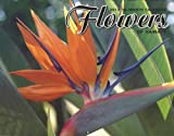 Hawaii 16 Month Trade Calendar Flowers of Hawaii 2013