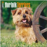 Norfolk Terriers 2014 Wall BrownTrout