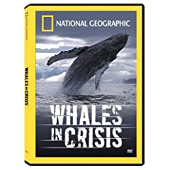 Whales in Crisis [DVD FULL] [INGLES] [Documental]