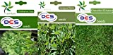 DCS Chilkarve Sag, Gongura & Doob Grass(Pack of 3 Per Pack 1 Grams)