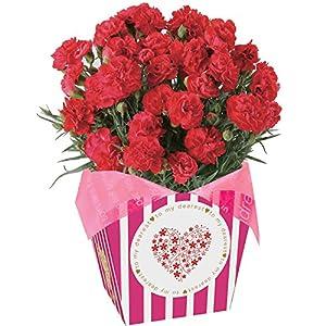 もう「母の日」のプレゼントは決まりましたか?