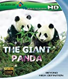 Image de The Giant Panda [Blu-ray]