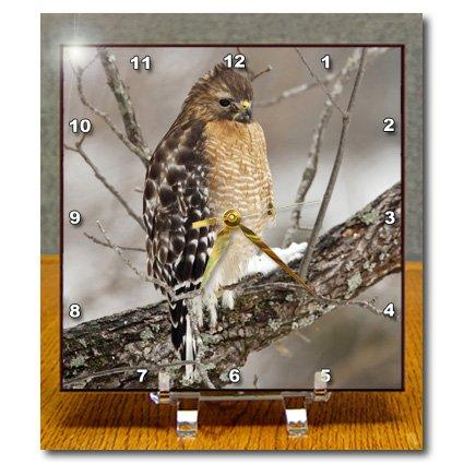 dc_90411 Danita Delimont - Birds - Red-shouldered Hawk, bird, Kentucky - US18 AJE0490 - Adam Jones - Desk Clocks adam jones платье из вискозы
