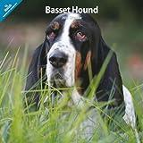 Basset Hound 2014 Wall Calendar