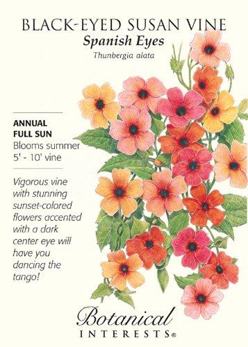 Spanish Eyes Black-Eyed Susan Vine - 20 Seeds - Thunbergia