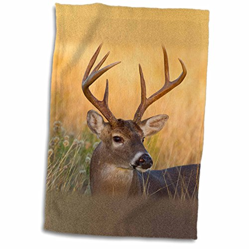 3dRose Danita Delimont - Larry Ditto - Deer - White-tailed Deer, Odocoileus virginianus, male in habitat, Texas, USA - 12x18 Towel (twl_191368_1)