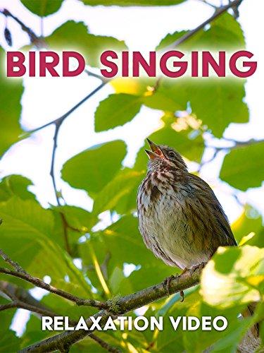 Relaxation Video: Bird Singing