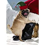 Avanti Christmas Cards, Friendly Pug, 10 Count ~ Avanti Press