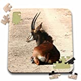 Angelique Cajam Safari Animals - South African Sable antelope - 10x10 Inch Puzzle (pzl_20109_2)