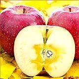 山形県産 りんご ご家庭用(準秀品) 早生ふじ 10kg(約26玉-46玉入り/お届け時期により品種変更)