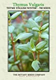 Thyme English Winter (700) Seeds - Thymus Vulgaris - Herb Seeds