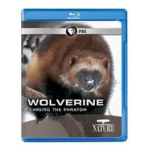Nature: Wolverine: Chasing the Phantom [Blu-ray]