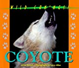 Wild Canines of North America - Coyote