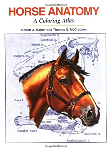 horse anatomy coloring pages - photo#25
