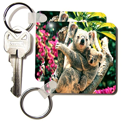 Baby Koala Images front-1040287