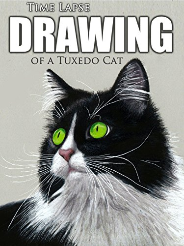 Clip: Time Lapse Drawing of a Tuxedo Cat
