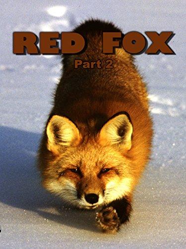 Red Fox: Part 2