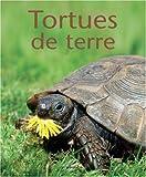 Tortues de terre d'occasion  Livré partout en France