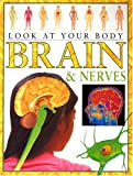 Brain and Nerves (Look at Your Body)