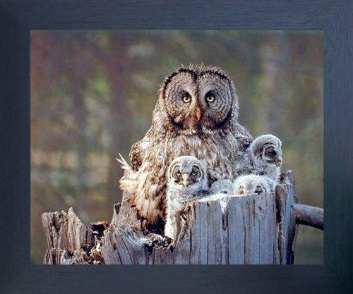 Great Grey Owl Family Bird Wildlife Animal Wall Decor Espresso Framed Picture Art Print (20x24)