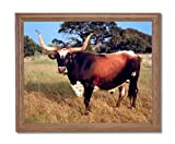 Texas Longhorn Steer Cattle Home Decor Wall Picture Oak Framed Art Print