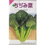 在来固定種 野菜の種「ちぢみ菜」5ml約1400粒 畑懐〔はふう〕
