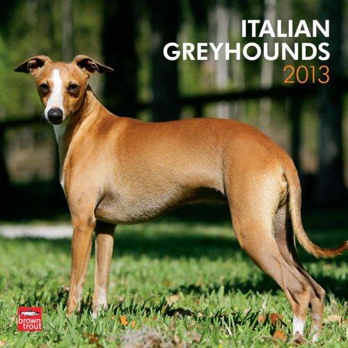 Greyhounds, Italian 2013 Square 12X12 Wall