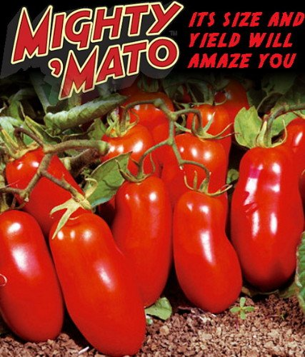 Mighty 'Mato Grafted San Marzano Tomato Plant - Easy to Grow/More Fruit