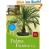 Palme, Ficus und Co: Die schönsten Arten für die Wohnung