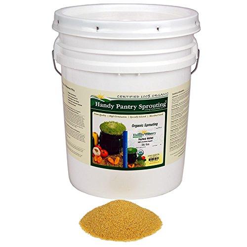Organic Hulled (Husk Removed) Millet Seeds: 35 Lb - Non-GMO Cereal Grain - Make Millet Beer, Grind Millet Flour, Cereal, Bird Seed, Emergency Food Storage