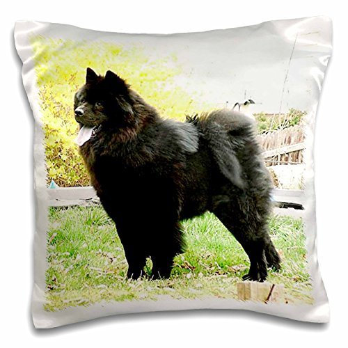 dogs-chow-chow-black-chow-16x16-inch-pillow-case