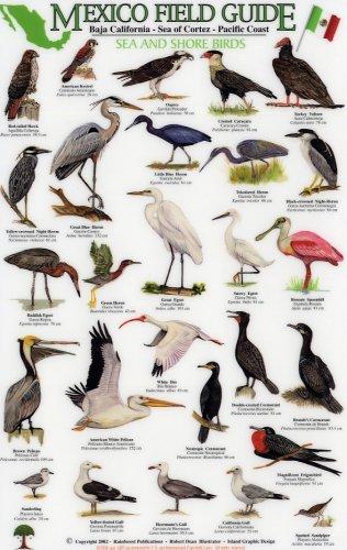 Sea and Shore Birds: Baja California - Sea of Cortez - Pacific Coast (Mexico Field Guides)