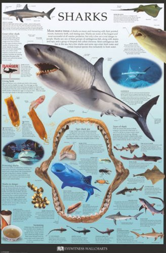 Sharks – Facts and Types – Dorling Kindersley 24×36 Poster